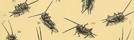 Cent Grillons (et autres contes pas piqués des hannetons), Henri Meunier (2013)